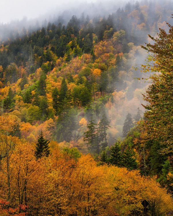Autumn at Newfound Gap thumbnail