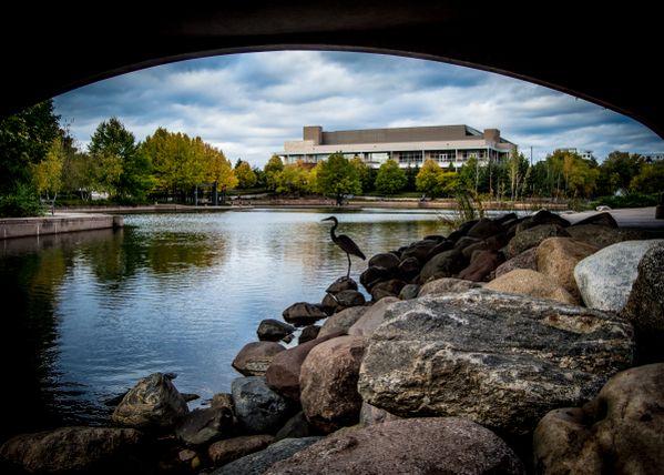 Centennial Lake Crane  thumbnail