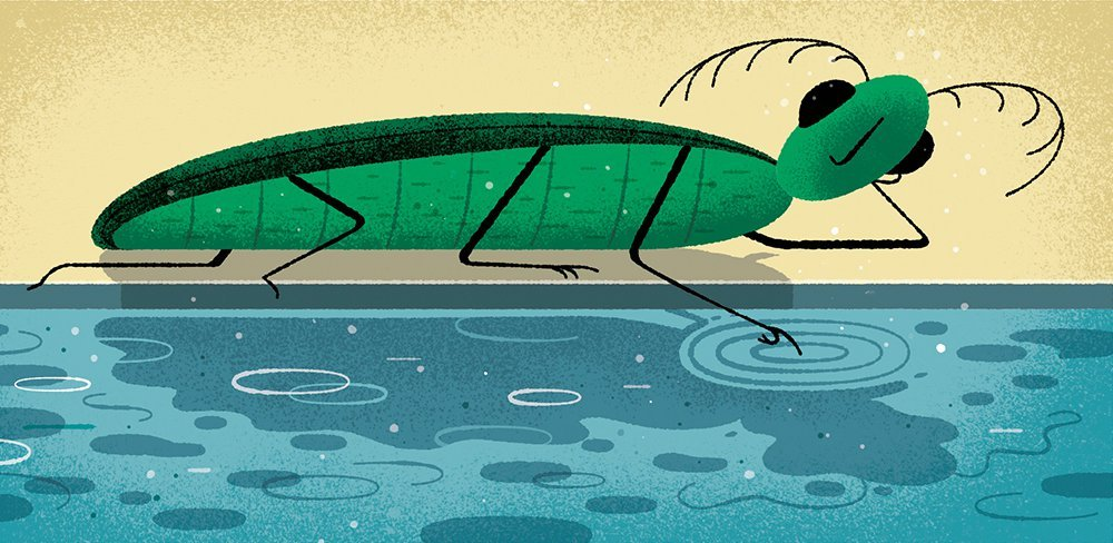 Conscious Insect Illustration