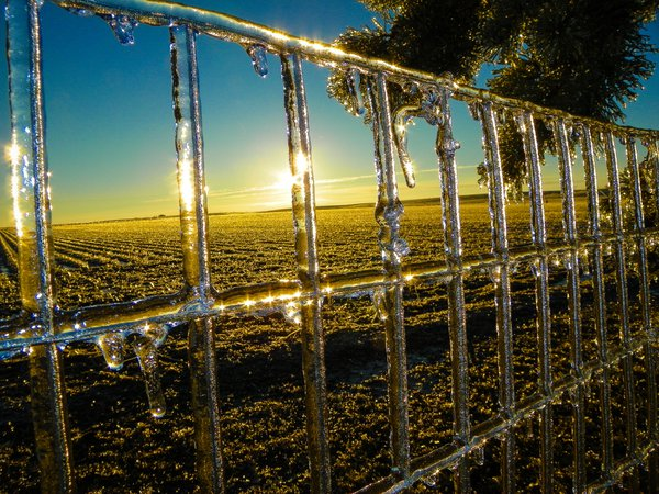 Beautiful ,Brilliant  Iced fence  against  a  Nebraska sunrise thumbnail