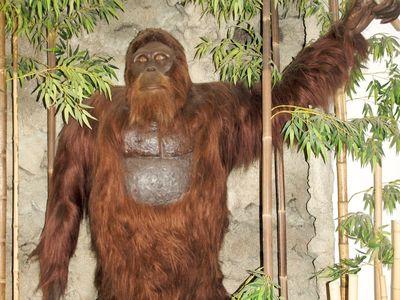 A reconstruction of Gigantopithecus