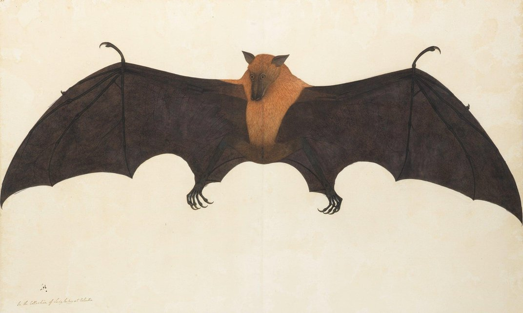 London Exhibit Celebrates Indian Artists Who Captured Natural History for the East India Company