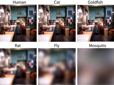 The team's findings compared the estimated visual acuity, or sharpness, of about 600 species.