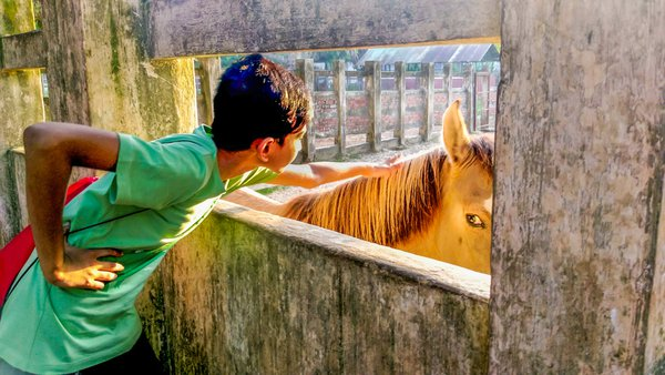 Horse and the Boy thumbnail