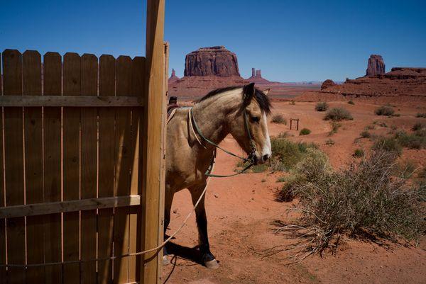 Horse, Monument Valley thumbnail