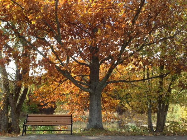 Lonely Bench in Fall thumbnail