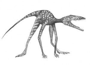 20110520083242Prorotodactylus-300x215.jpg
