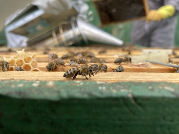 First spring beehive inspection thumbnail