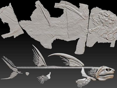 The shark fossil is nearly seven feet long, with two 2.5-foot-long fin spines on its back.