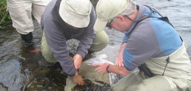 team collects invertebrates