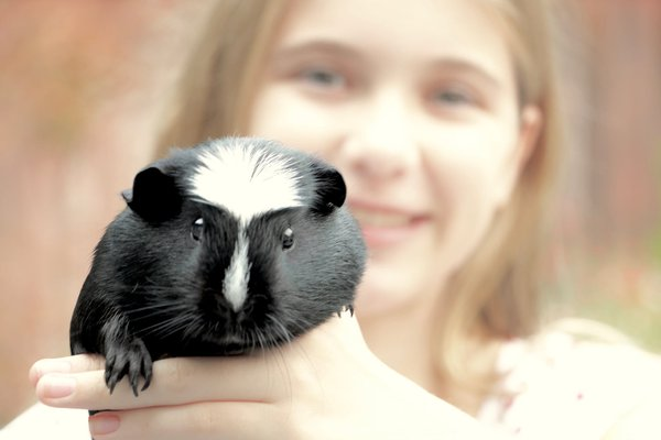 Girl with her guinea pig thumbnail