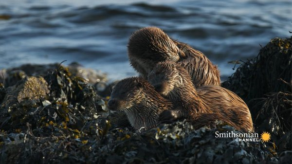 Preview thumbnail for These Twin Otter Pups Are Learning How to Adult