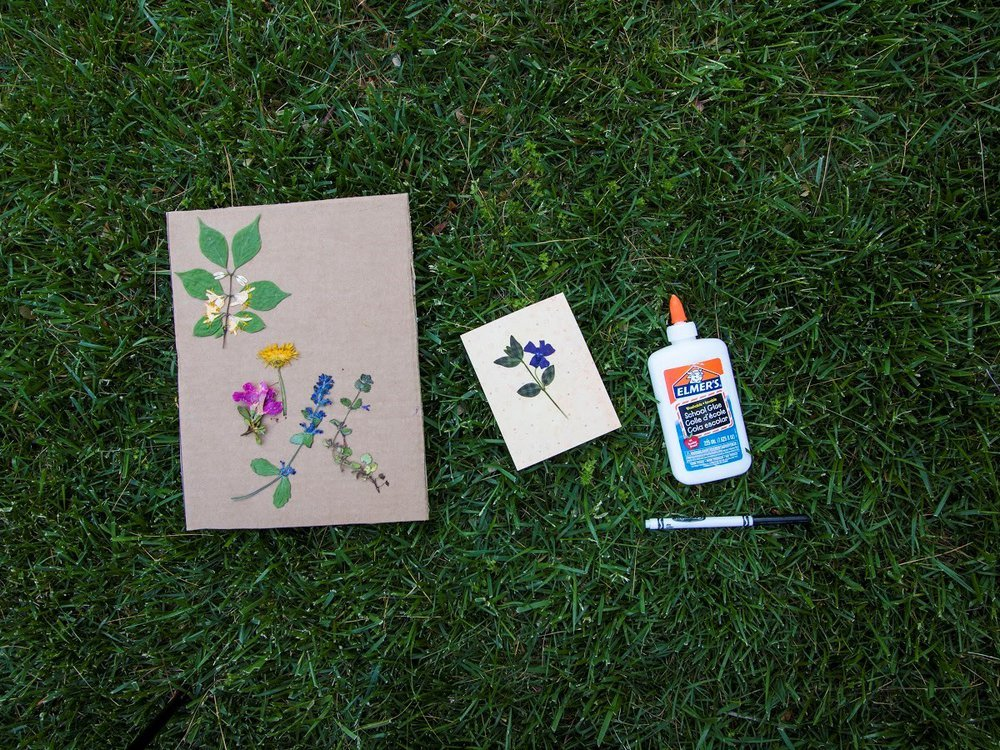 Pressed flowers can be used in journals, plant identification booklets and other projects. (Erika Gardner, Smithsonian Institution)