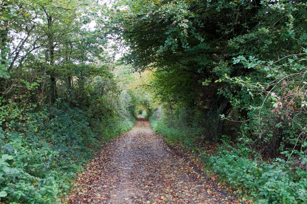 A round tunnel on a country walk thumbnail