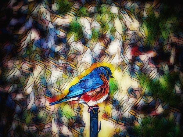 Perched Blue Bird thumbnail