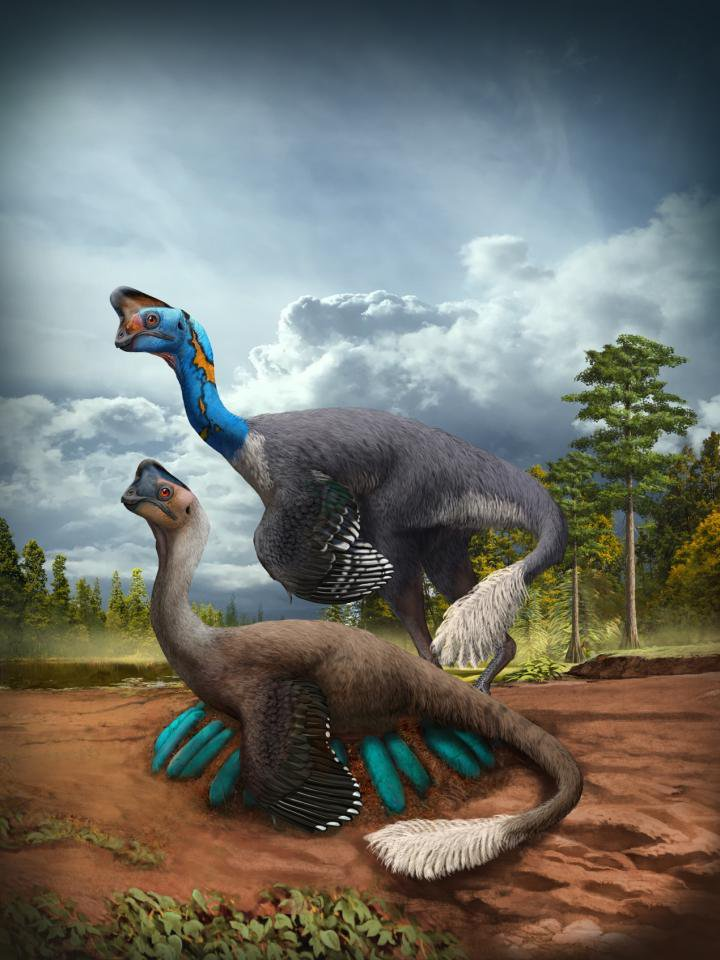 For the First Time, Paleontologists Unearth Fossil of Non-Avian Dinosaur Incubating a Nest of Eggs