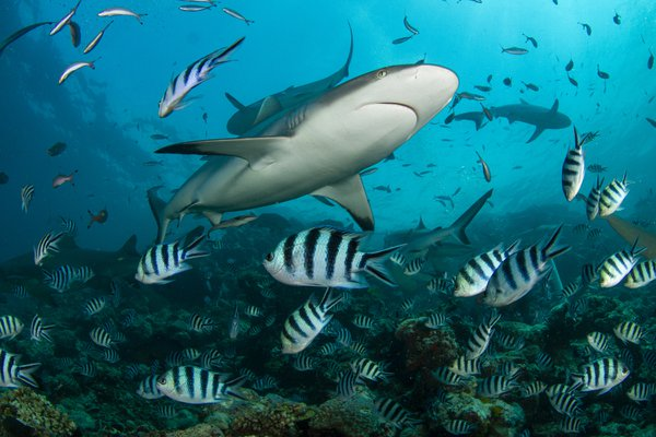Shark Reef thumbnail