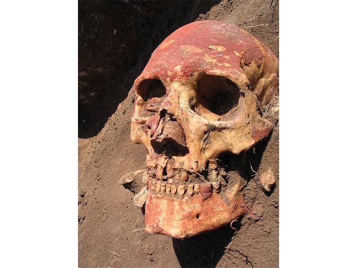 plague-skull.jpg