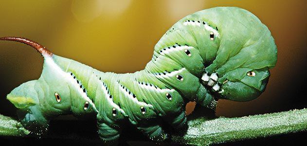 Wild-Things-caterpillars-631.jpg