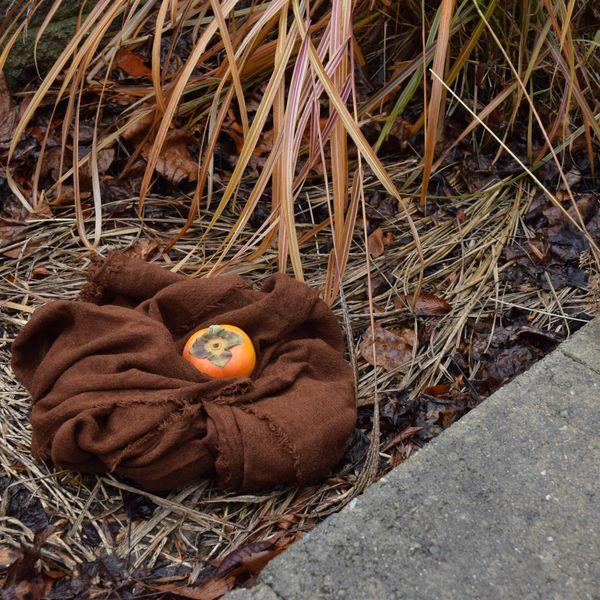 Nest thumbnail