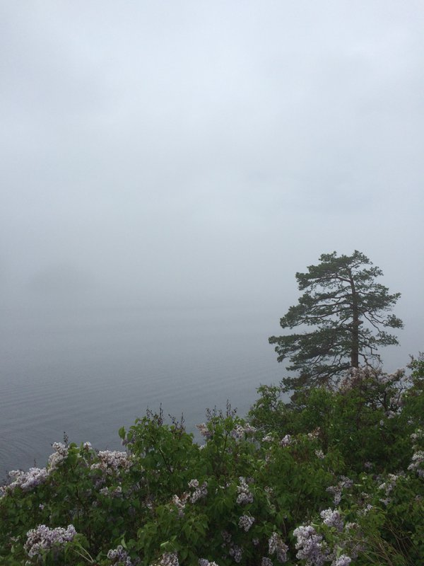 The mist thumbnail