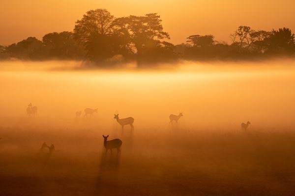 Busanga Morning Mist thumbnail