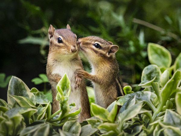 Two cute squirrels. thumbnail