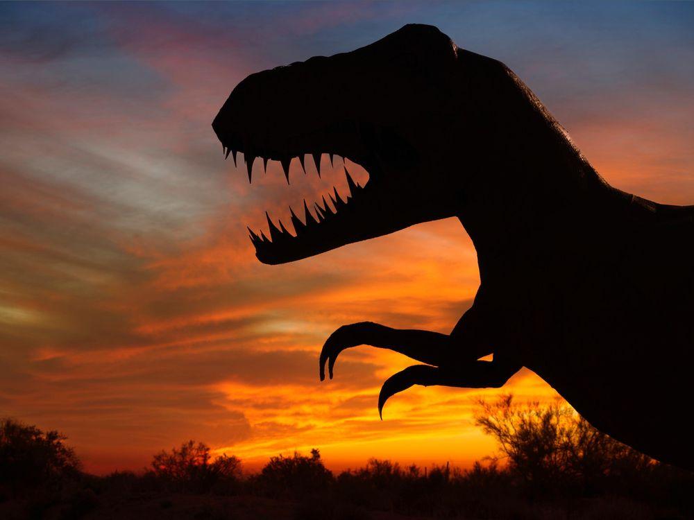 T. rex sillouhette