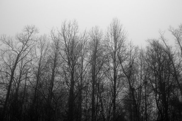 Dreamy trees in fog thumbnail