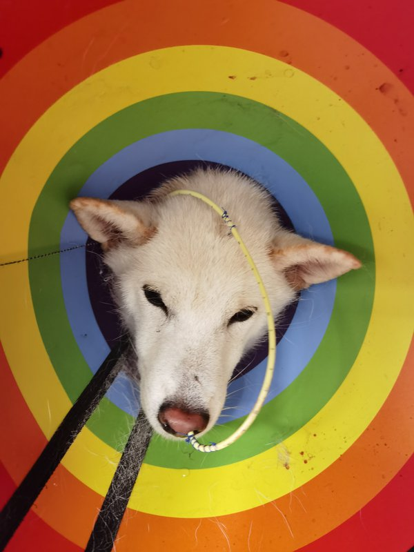 Portrait of a sick dog thumbnail
