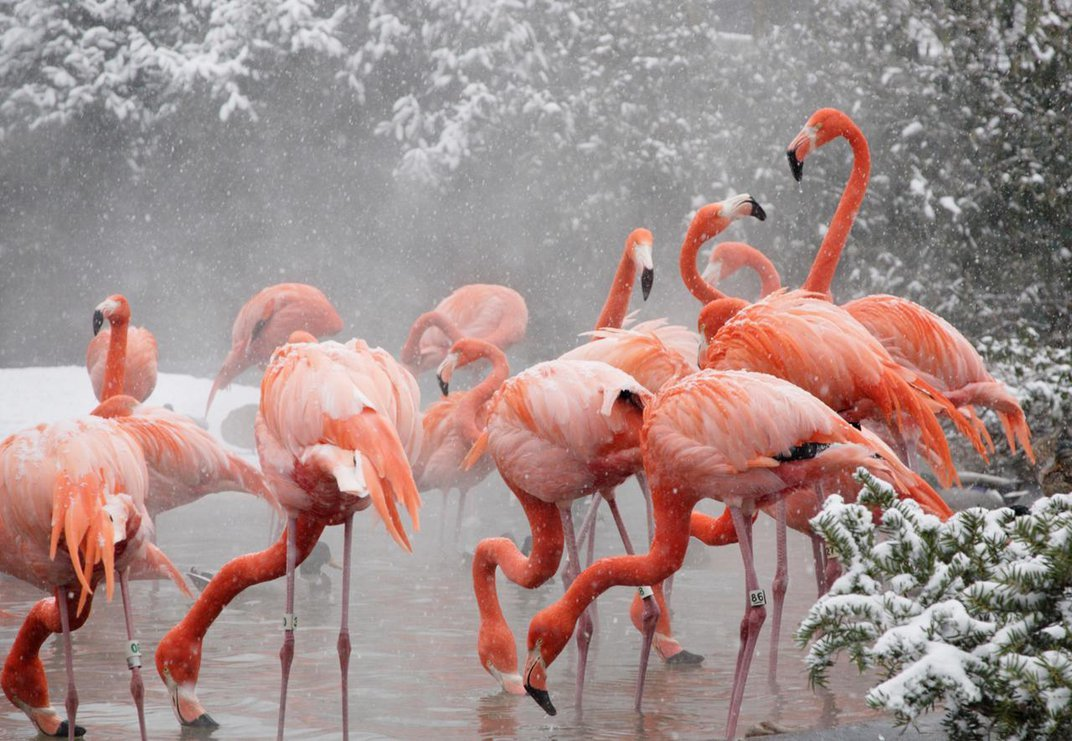How Zoo Animals Stay Safe and Warm in the Arctic Blast