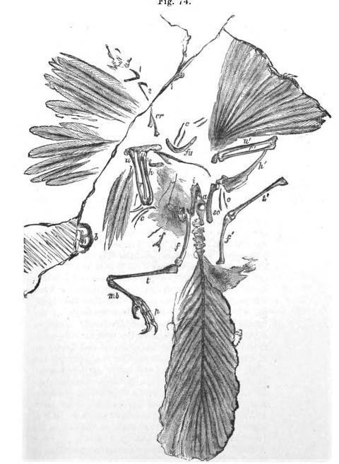 20110520083250london-archaeopteryx.jpg