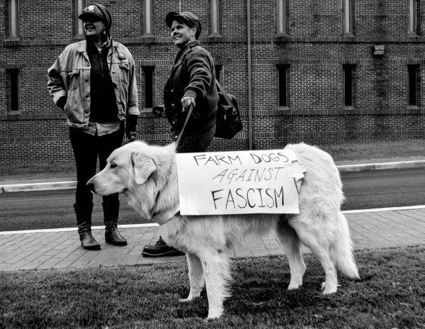 Farm dog and lesbian couple against fascism. thumbnail