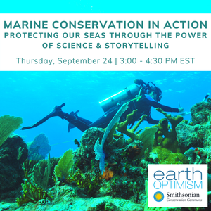 Discover the power of science and storytelling in marine conservation at the Smithsonian! Learn more and register for the webinar here.