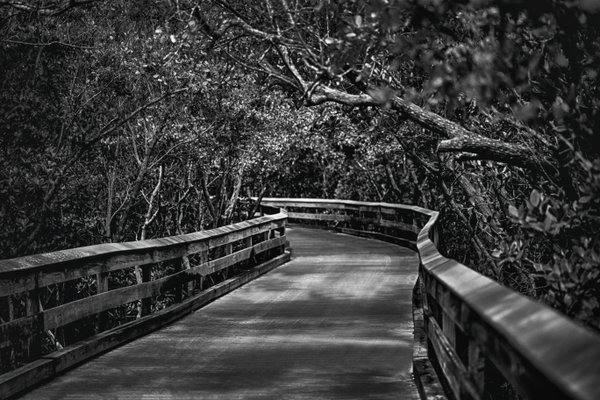 Black and white of an empty path of canopy trees thumbnail