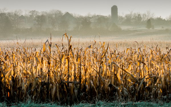 Frosty Fall Morning thumbnail