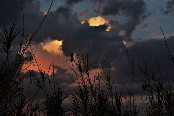 Bamboo Nights thumbnail