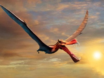 In addition to its school-bus-length wingspan, the creature had a three-foot-long skull with a pointed snout and around 40 sharp teeth.