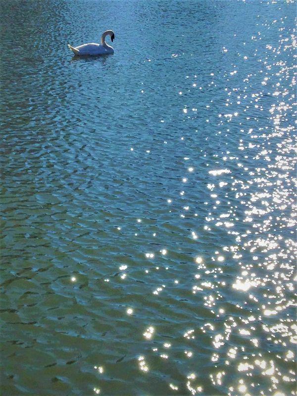 Swan Lake in Tokyo thumbnail