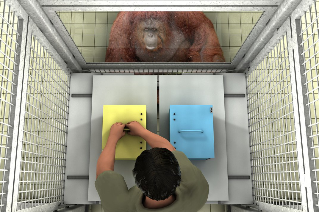 Monkeys May Recognize False Beliefs—Knocking Over Yet Another Pillar of Human Cognition