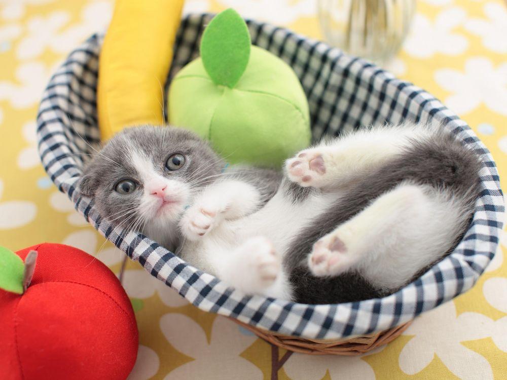 10_27_2014_cat.jpg