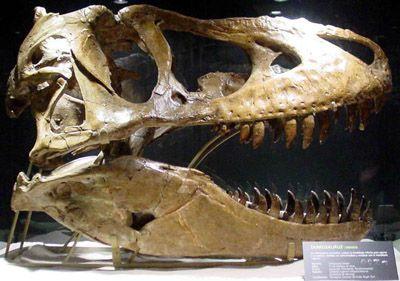 20110520083110800px-tarbosaurus080eue.jpg