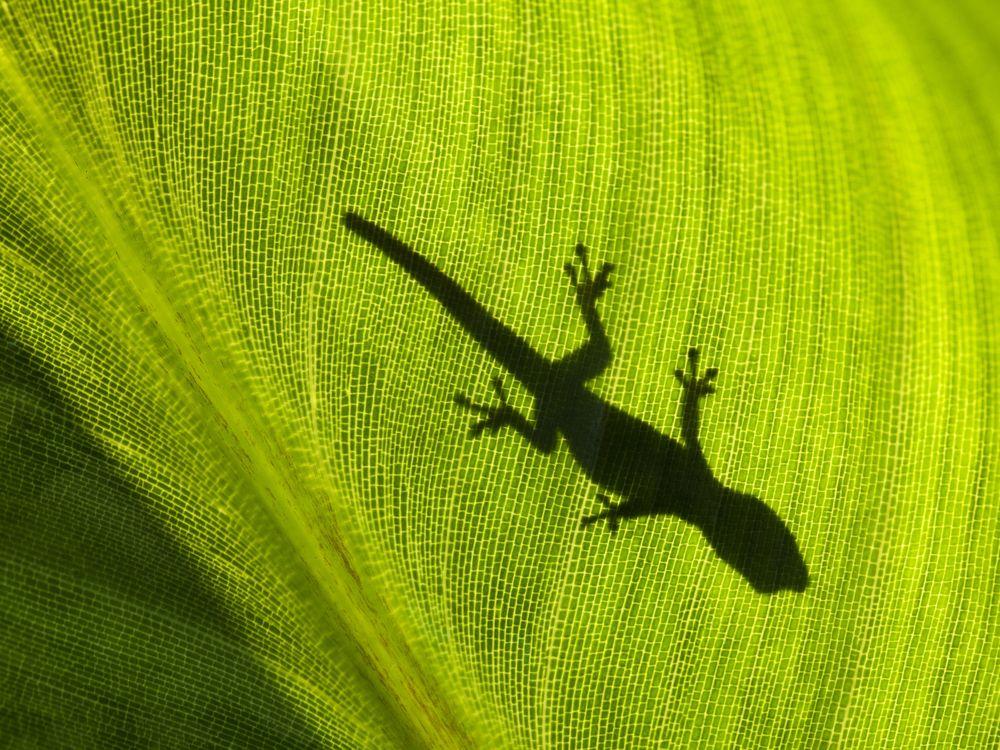 09_02_2014_gecko.jpg