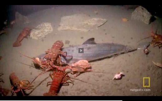 20110520083316nat-geo-sea-monster.jpg