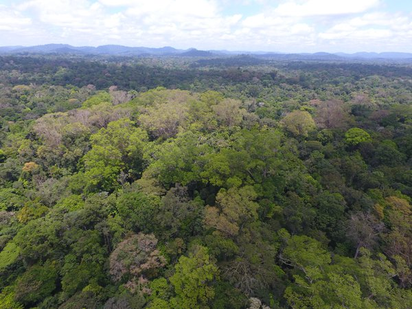 Our beautifull Amazon Forest thumbnail