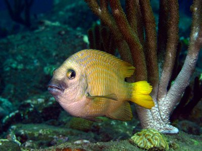 Damselfish typically live in the nooks and crannies of coral reefs. But do you have anything with more of an open concept?