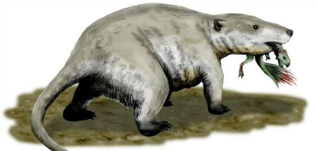 Rat-eating-dino-hero-2.jpgA restoration of Repenomamus snacking on a young Psittacosaurus