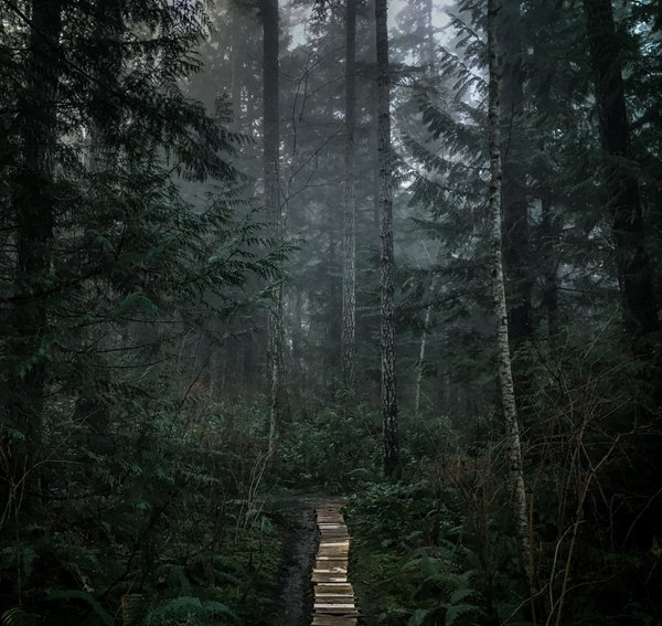 Fog within the forest trails thumbnail