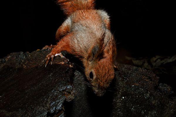 Squirrel Exploring thumbnail