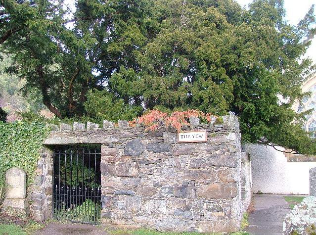 Fortiingall Yew
